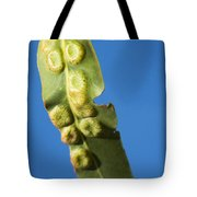 Gum Leaf Galls Tote Bag