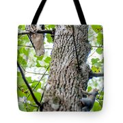 Hawk Hunting For A Squirrel On An Oak Tree Tote Bag