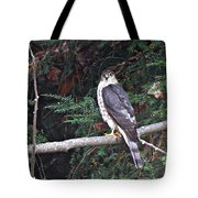 Hawk On Branch Tote Bag