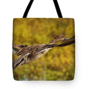 Hen Northern Pintail In Flight  Tote Bag