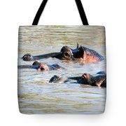 Hippopotamus Group In River. Serengeti. Tanzania Tote Bag