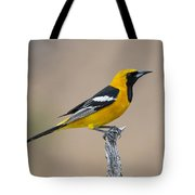 Hooded Oriole Tote Bag
