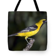 Hooded Oriole Male Tote Bag