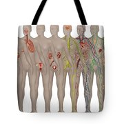 Human Systems In The Female Anatomy Tote Bag