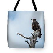 Juvenile Eagle Tote Bag