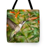 Juvenile Male Ruby-throated Hummingbird Tote Bag
