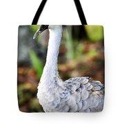 Juvenile Sandhill Crane Grus Canadensis Pratensis II Usa Tote Bag
