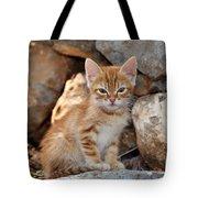 Kitten In Hydra Island Tote Bag