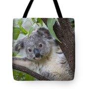 Koala Joey Australia Tote Bag