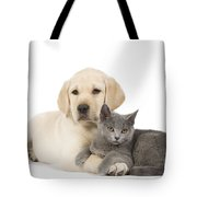 Labrador Puppy With Chartreux Kitten Tote Bag