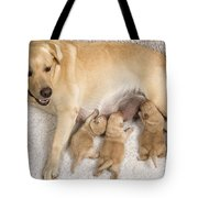 Labrador With Young Puppies Tote Bag