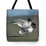 Laughing Gulls Tote Bag