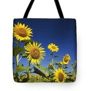 Laval, Quebec, Canada Sunflowers Tote Bag