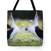 Laysan Albatross Courtship Dance Hawaii Tote Bag