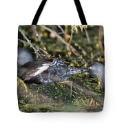 Least Grebe Tote Bag