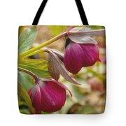 Lenten Roses  Tote Bag