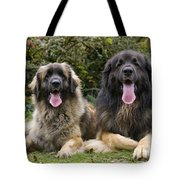 Leonberger Dogs Tote Bag