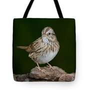 Lincoln Sparrow Tote Bag
