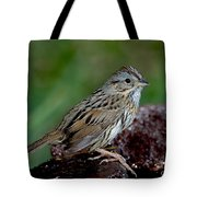 Lincolns Sparrow Tote Bag