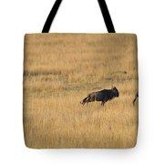 Lion On The Hunt Tote Bag