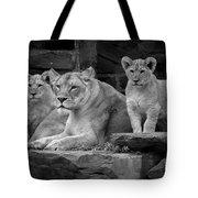Lioness And Cubs Tote Bag