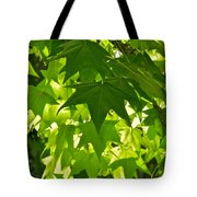 Liquidambar Tree In The Morning Sun Tote Bag