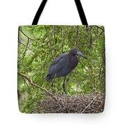 Little Blue Heron Nesting Texas Tote Bag