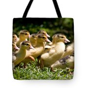Yellow Muscovy Duck Ducklings Running In Hurry  Tote Bag
