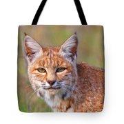 Magical Bobcat Tote Bag
