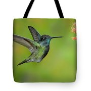 Magnificent Hummingbird Tote Bag