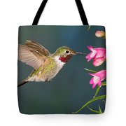 Male Broad-tailed Hummingbird Tote Bag