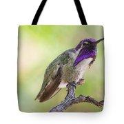 Male Costa Hummingbird Tote Bag