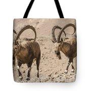 Male Nubian Ibex Tote Bag