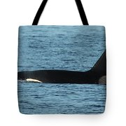 Male Orca Killer Whale In Monterey Bay California 2013 Tote Bag