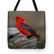 Male Scarlet Tanager Tote Bag