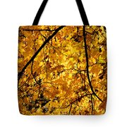Maple Tree In Yellow Fall Colors Tote Bag