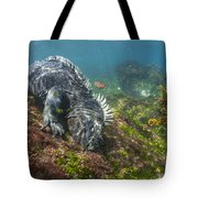 Marine Iguana Feeding On Algae Punta Tote Bag