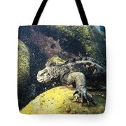 Marine Iguana Grazing On Seaweed Tote Bag