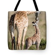 Masai Giraffe Giraffa Camelopardalis Tote Bag