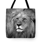 Masai Mara Lion  Tote Bag