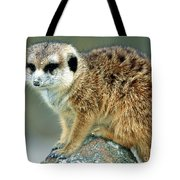 Meerkat Suricata Suricatta Tote Bag