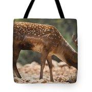 Mesopotamian Fallow Deer 2 Tote Bag