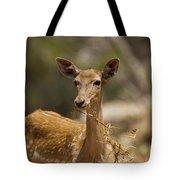 Mesopotamian Fallow Deer 3 Tote Bag