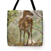 Mesopotamian Fallow Deer 5 Tote Bag