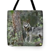 Mexican Grey Wolf 1 Tote Bag