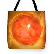 Microscopic View Of A Blastula Tote Bag