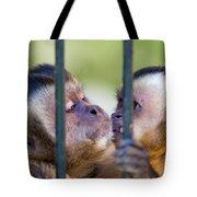Monkey Species Cebus Apella Behind Bars Tote Bag