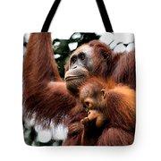Mother And Baby Orangutan Borneo Tote Bag