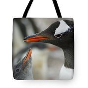 Mother And Chick Gentoo Penguins  Tote Bag