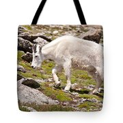 Mountain Goat On Mount Evans Tote Bag